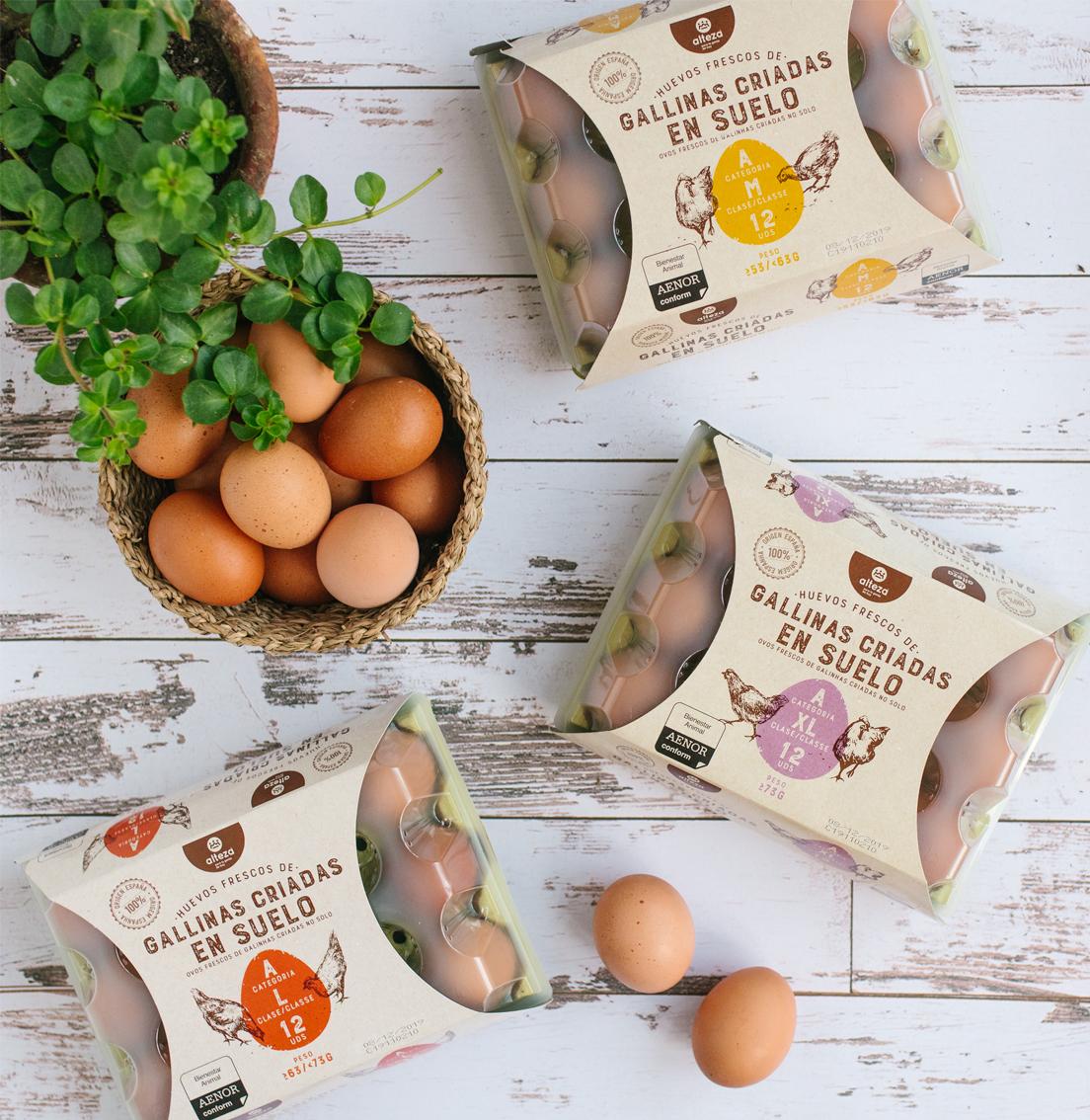 Plano cenital de varias docenas de huevos Alteza de gallinas felices