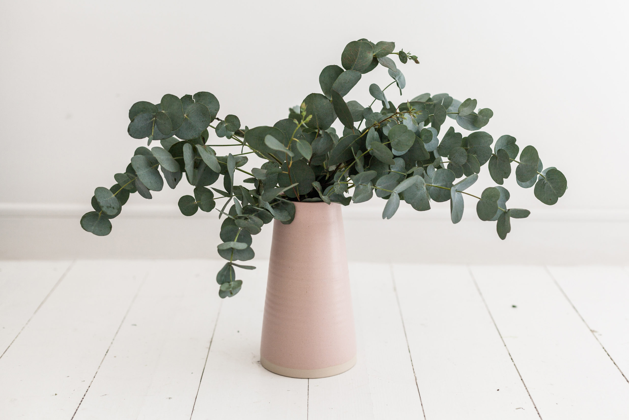 Imagen de una planta de eucalipto en un jarrón blanco